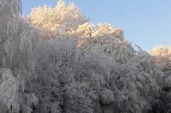 De boom van de winter royalty-vrije stock foto's