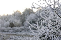 De boom van de winter stock foto