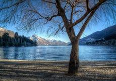 De boom van de winter bij oever van het meer Stock Foto