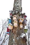 De boom van de winter met de inzameling van vogels nestelen-dozen Stock Fotografie