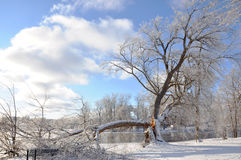 De Boom van de winter na Sneeuw Stock Foto's
