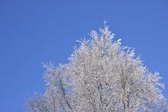 De boom van de winter tegen blauwe hemel Stock Afbeelding
