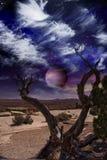 De Boom van de woestijn Stock Foto