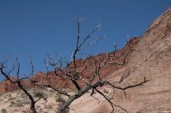 De boom van de woestijn Royalty-vrije Stock Afbeeldingen