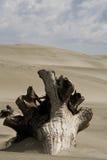 De boom van de woestijn in kleur stock afbeeldingen