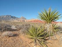 De Boom van de yucca stock fotografie