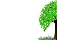 De boom van de zomer Stock Foto