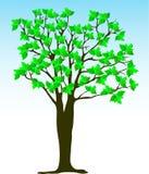 De boom van de zomer Stock Foto's