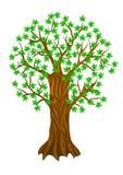 De boom van de zomer, Royalty-vrije Stock Fotografie