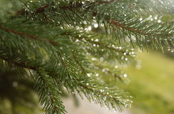 De boom van de zomer stock afbeelding