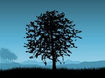 De boom van de zonsondergang Stock Foto