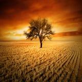 De Boom van de zonsondergang stock fotografie
