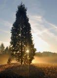 De Boom van de zonsondergang Stock Foto's