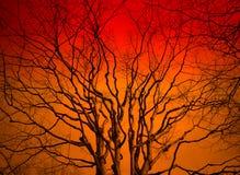De boom van de zonsondergang Royalty-vrije Stock Foto