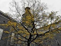 De boom van de herfst Vector beschikbare illustratie royalty-vrije stock foto's
