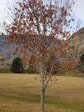 De boom van de herfst Vector beschikbare illustratie royalty-vrije stock foto