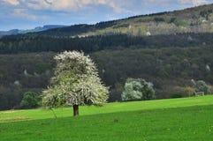 De boom van het aardlandschap stock foto