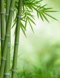 De boom van het bamboe met bladeren Royalty-vrije Stock Fotografie