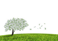De boom van het contante geld Royalty-vrije Stock Afbeeldingen