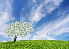 De boom van het contante geld Stock Foto's