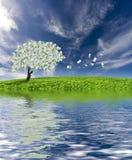 De boom van het contante geld met bezinning Royalty-vrije Stock Fotografie