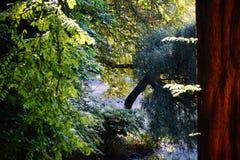 de boom van het de bezinningswater van de meerherfst Stock Foto's