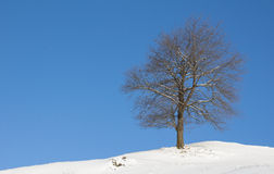 De Boom van het de winterlandschap met Sneeuw en Blauwe Hemel stock foto