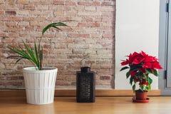 De Boom van het Detailbloemen van bloemenpoinsetta royalty-vrije stock foto's