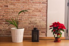 De Boom van het Detailbloemen van bloemenpoinsetta stock foto