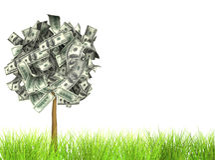 De boom van het geld Royalty-vrije Stock Afbeelding