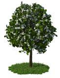 De boom van het geld Royalty-vrije Stock Afbeeldingen