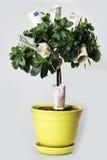 De boom van het geld Stock Foto's