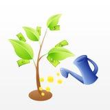 De boom van het geld met het water geven en muntstukken Stock Afbeelding