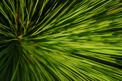 De boom van het gras Royalty-vrije Stock Foto
