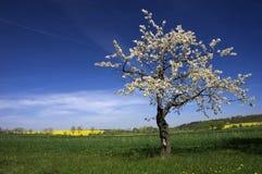 De boom van het het graslandschap van de lente Stock Afbeeldingen