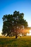 De boom van het huwelijk Stock Foto