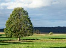 De boom van het landschap Stock Foto