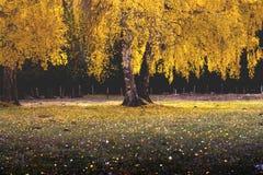 De boom van het landschap royalty-vrije stock foto