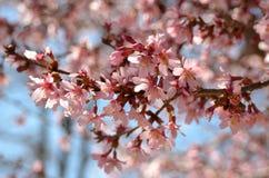 de boom van het de lentefruit royalty-vrije stock afbeelding