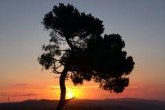 De boom van het leven Royalty-vrije Stock Foto's