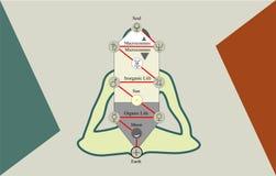 De Boom van het Leven en de Mens in Lotus Position stock illustratie