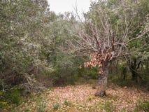 De boom van het leven met vergankelijk blad royalty-vrije stock foto
