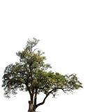 De boom van het millennium stock afbeeldingen