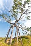 De boom van het monster Stock Afbeelding