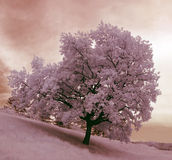 De boom van het patience Royalty-vrije Stock Foto's