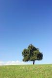 De boom van het patience op horizon stock foto's