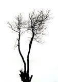 De boom van het silhouet stock afbeelding