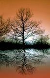 De boom van het silhouet Stock Fotografie