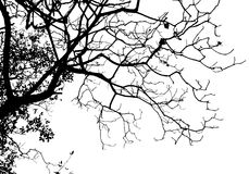 De boom van het silhouet Royalty-vrije Stock Afbeeldingen