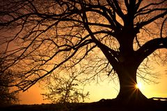 De Boom van het silhouet Stock Foto's